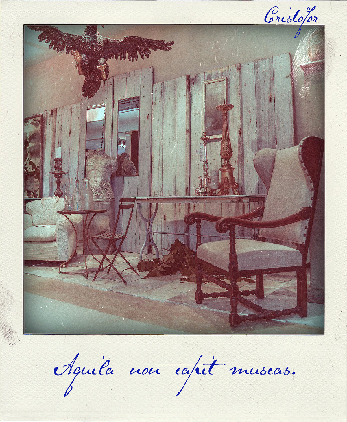 Aquila Non Capit Muscas, Polaroid Stories by Cristina Schek