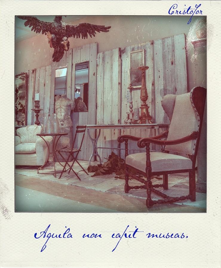 Aquila Non Capit Muscas, Polaroid Stories by Cristina Schek