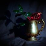 Pomegranate by Cristina Schek (13)