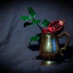 Pomegranate by Cristina Schek (29)