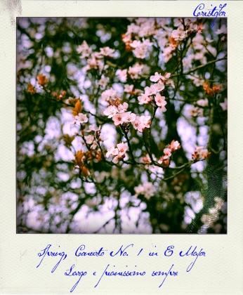 Spring Concerto, polaroid by Cristina Schek (1)