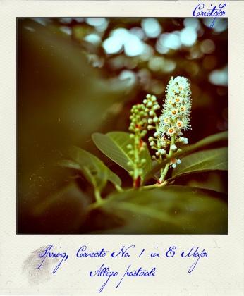 Spring Concerto, polaroid by Cristina Schek (2)