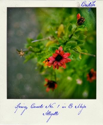Spring Concerto, polaroid by Cristina Schek (3)