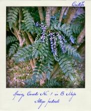 Spring Concerto, polaroid by Cristina Schek (4)