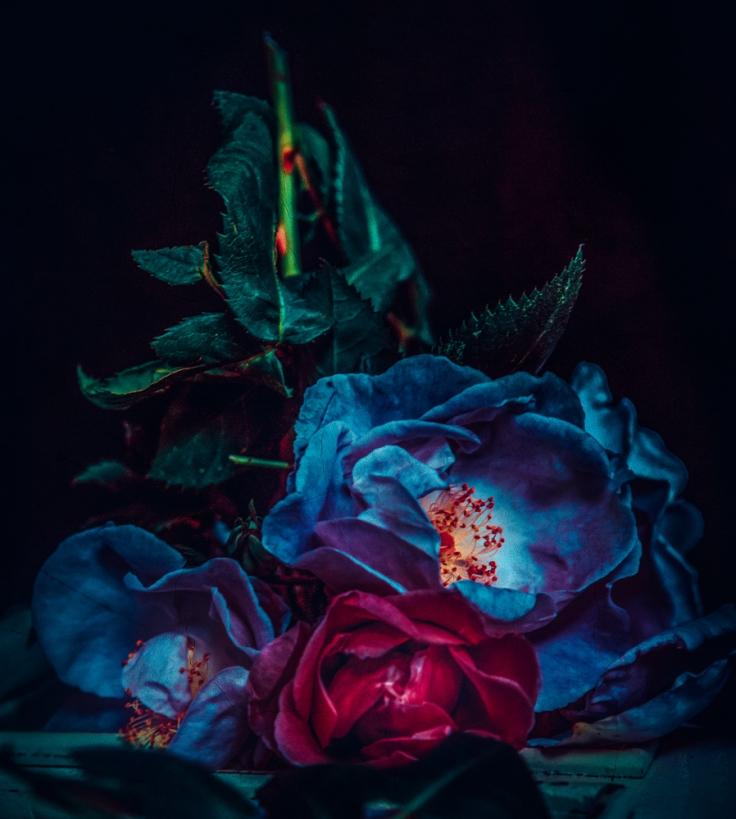Blue+Rose+I+@+Twin+Peaks+Studios+by+Cristina+Schek